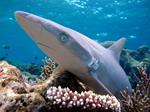 Saving Sharks Through Science-Based Fisheries Management