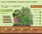 What is happening to India's forest cover?
