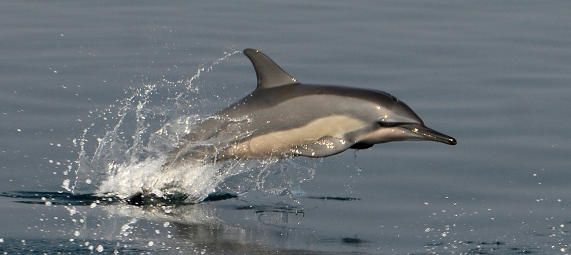 New sanctuaries for dolphins and whales in Bangladesh