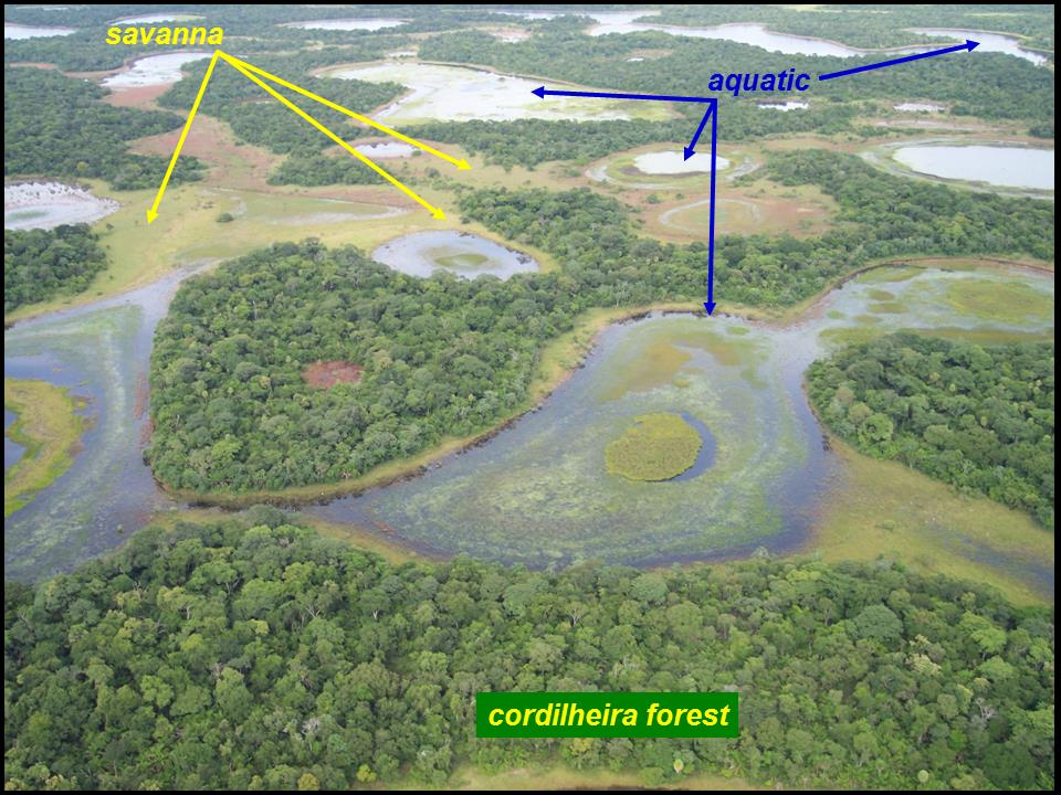 wetland ecosystem The east texas ecosystem contains much of texas' remaining bottomland hardwood wetlands, as well as considerable areas of mixed pine-hardwood forest and commercial pine plantations other.
