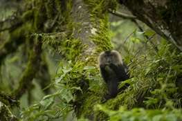 WCS Congratulates India for Newly Expanded Protected Areas that Safeguard Macaques, Hornbills, Bats