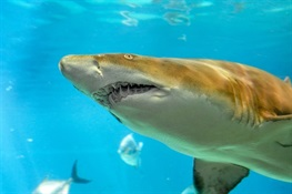 "SHARK WEEK NEWS: Help Bronx Zoo Raise Money For Local Shark Research In AZA's ""Party for the Planet"" Video Competition"