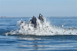 New York's Offshore Waters Home to Whales & Other Marine Species