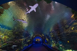 WCS, Coney Island Community, and City of New York Celebrate Ribbon Cutting of Ocean Wonders: Sharks! at the New York Aquarium