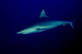 Government of Madagascar  Creates Country's First Shark Sanctuary