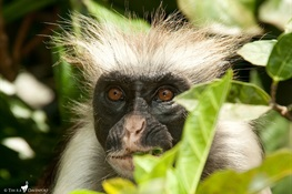 One of Africa's Rarest Primates Protected by… Speedbumps