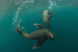 Argentina Creates Two Massive Marine Parks