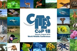 Concluding Statement from WCS on CITES CoP18