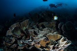 Study Identifies Reefs with Potential to Survive Climate Change's Impacts