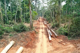 Study Documents Impacts of Selective Logging and Associated Disturbance on Intact Forest Landscapes and Wildlife of Northern Congo