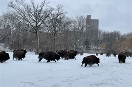 Zoos and Aquarium Reopen Following Snowstorm