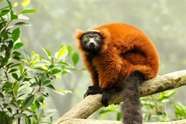 Cool Effect Partners with WCS to Save Madagascar's Makira Natural Park