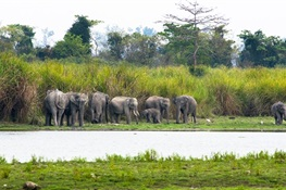 Photographic Identities of Individual Elephants Provide Reliable Information on their Population in India's Kaziranga National Park