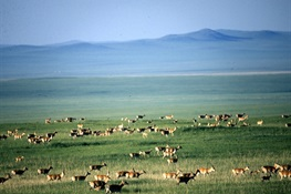 Eastern Steppe Meets Yellowstone