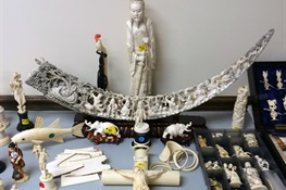 New York State to Destroy More Than One Ton of Illegal Ivory In Central Park
