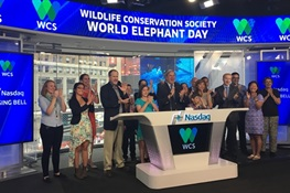 WCS Rings the Nasdaq Stock Market Closing Bell for World Elephant Day
