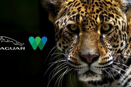 Jaguar North America Teams up With WCS to Raise Awareness for International Jaguar Day