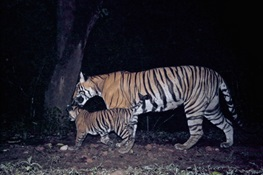 WCS Releases Top Ten Camera Trap Pics from 2014