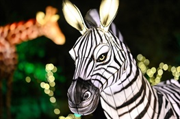 Bronx Zoo Holiday Lights 2020 is Underway