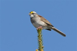 "Birds and Rural Sprawl: New study finds that bird communities in two key landscapes react differently to ""exurban"" development"