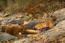 WILDLIFE HOT TUB: Remarkable camera trap video footage shows a parade of Asian wildlife lounging and drinking from a Jacuzzi-sized watering hole