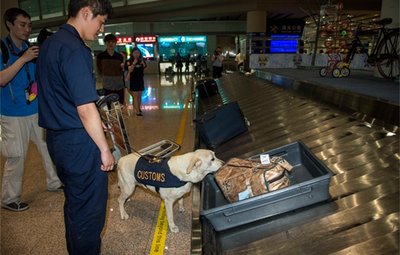 Parker the ivory sniffing dog at work. Cr: WCS - China