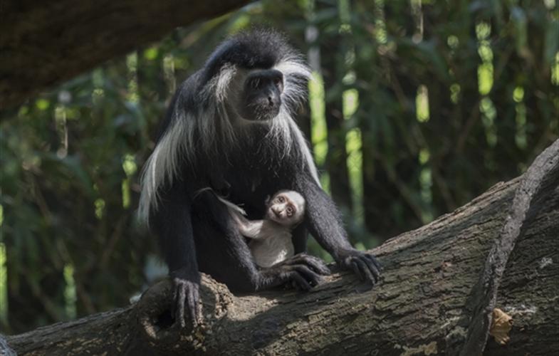 Bronx Zoo S Congo Gorilla Forest Welcomes Newborn Newsroom