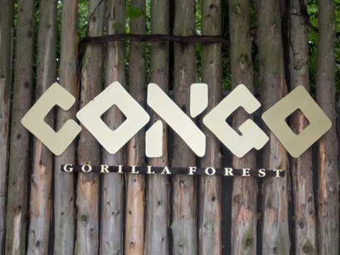 Gallery image 1 - Congo Gorilla Forest