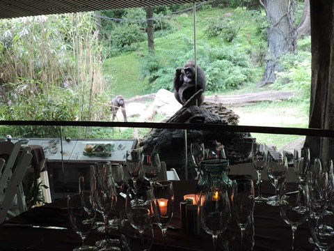 Gallery image 8 - Congo Gorilla Forest