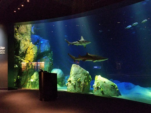 Gallery image 1 -  Ocean Wonders: Sharks!