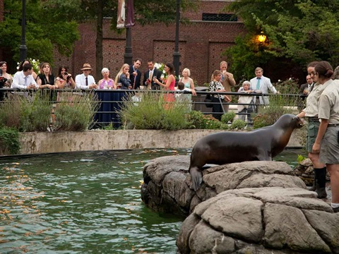 Gallery image 5 - Sea Lion Court